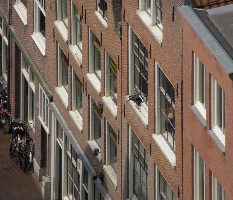 Huisvoorgevels in Amsterdam stock afbeelding