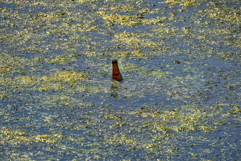 huisvuil, fles in een vijverhoogtepunt wordt weggedaan van algen die royalty-vrije stock afbeeldingen