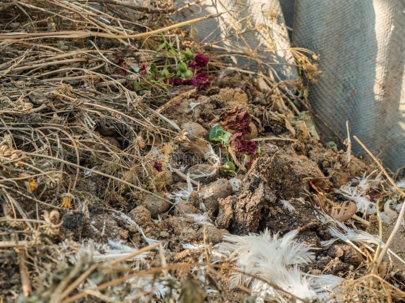 Huisvuilhoop van droog gras, kippenveren, rotte groenten en oud, droog bloemenclose-up Het rotten en het rotten stock fotografie