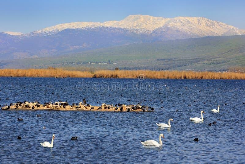 Hula Jeziorny rezerwat przyrody, Hula dolina, Izrael obrazy stock