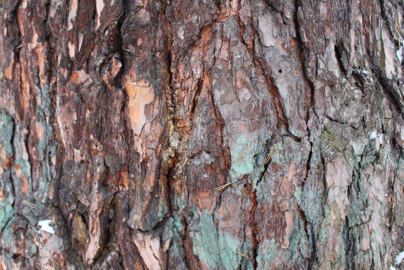 Hulp bruine schors van een grote boom-achtergrond en een textuur stock afbeeldingen