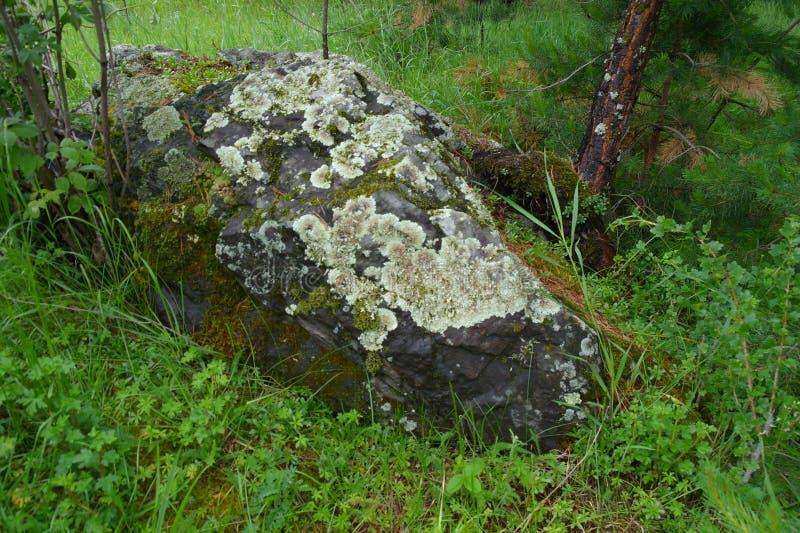 Hulp en textuur van steen met patronen en mos Natuurlijke achtergrond Keien met groen in het bos worden behandeld dat stock afbeelding