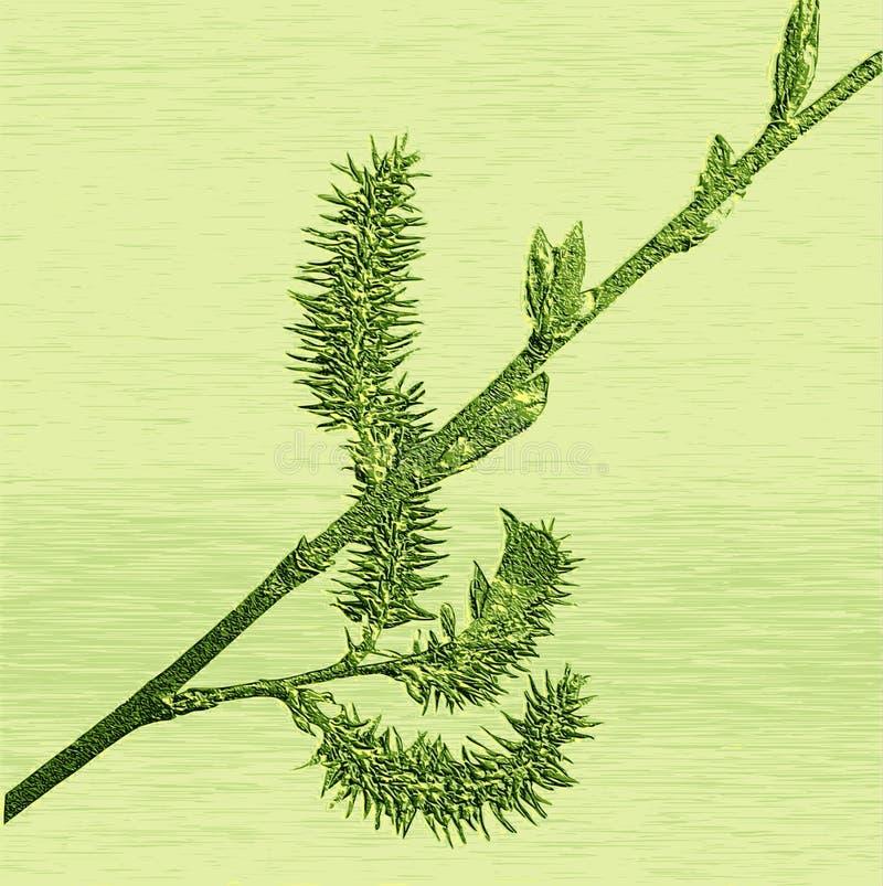 Hulp van in reliëf gemaakt bloeiend wilgentakje stock illustratie