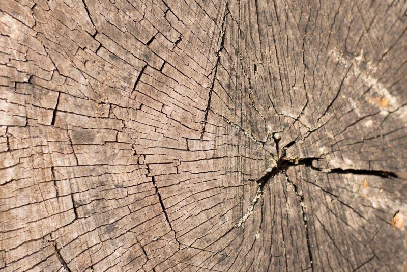 Hulptextuur van de bruine schors van een boom met groen mos op het Horizontale foto van een textuur van de boomschors Hulp creati stock fotografie