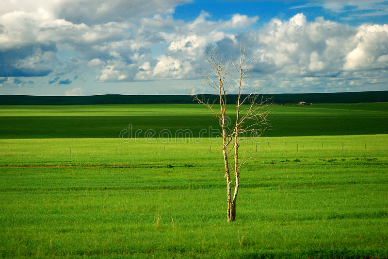 Hulunbuir prairie. Beautiful, vast ,Pure Hulunbuir prairie royalty free stock photos