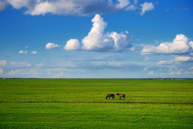 Hulunbuir prairie. Beautiful, vast ,Pure Hulunbuir prairie royalty free stock image