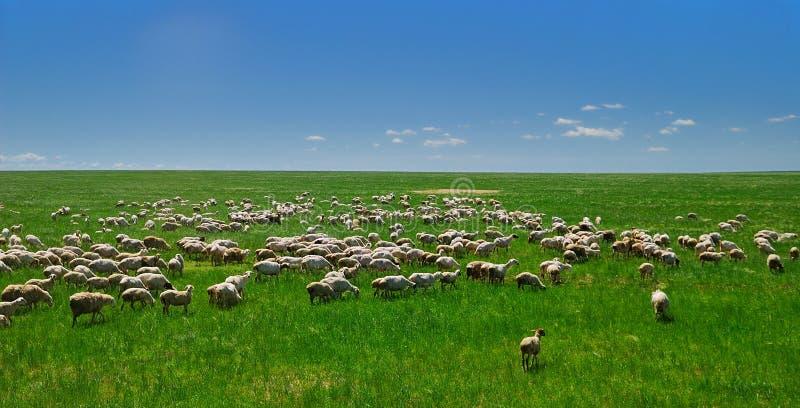 Hulunbuir prairie. Beautiful, vast ,Pure Hulunbuir prairie stock image
