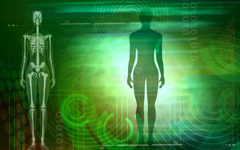 humain illustration de vecteur