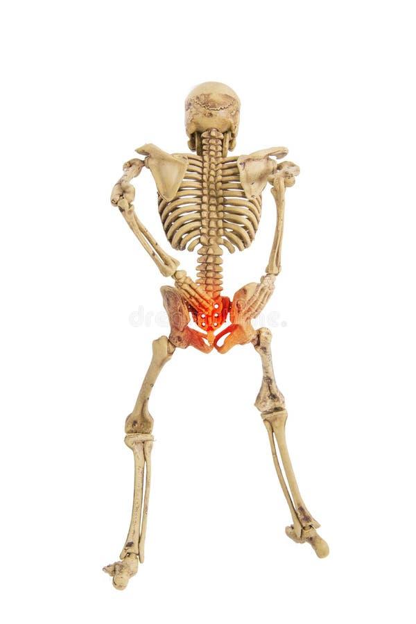 Humain squelettique d'anatomie image libre de droits