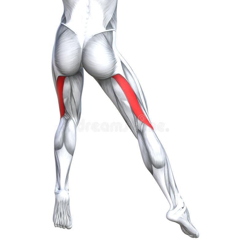 Humain supérieur arrière fort de jambe d'illustration du concept 3D illustration stock