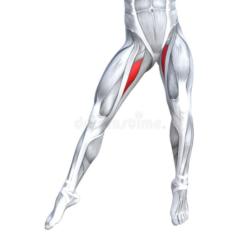 Humain supérieur avant fort de jambe d'illustration du concept 3D illustration libre de droits