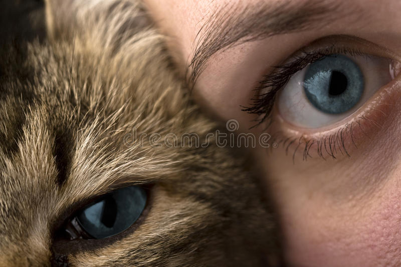 Humains et animaux photographie stock