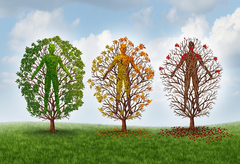 Human Aging Concept. And deterioration of health due to disease in the body as a healthy green tree shaped as a person changing leaf color and losing leaves as stock illustration
