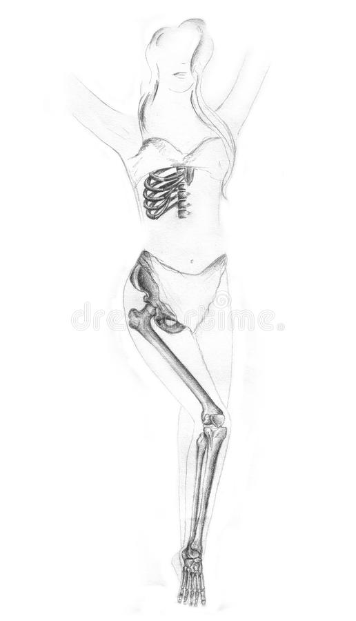 Human anatomy royalty free stock photography