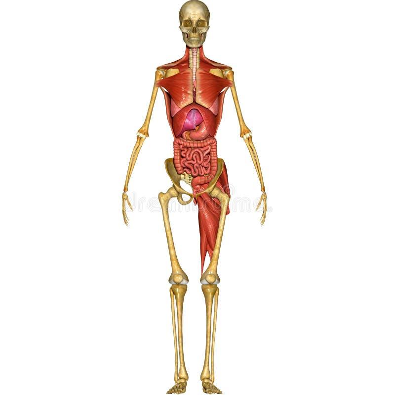 Human Anatomy Stock Illustration Illustration Of Hand 44797652