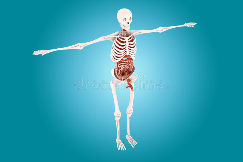 Human anatomy. In color background stock illustration