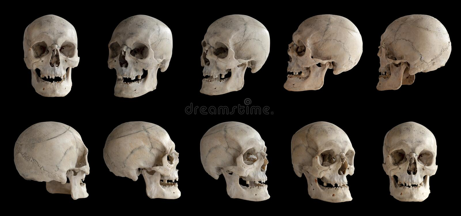 Human anatomy. Human skull. Collection of rotations of the skull. Skull at different angles. I royalty free stock images