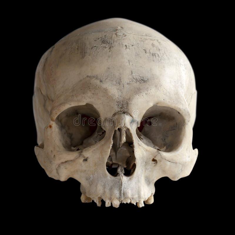 Human anatomy. A human skull with no jaw, isolated on black. A human skull with no jaw, isolated on black. Human anatomy stock photography