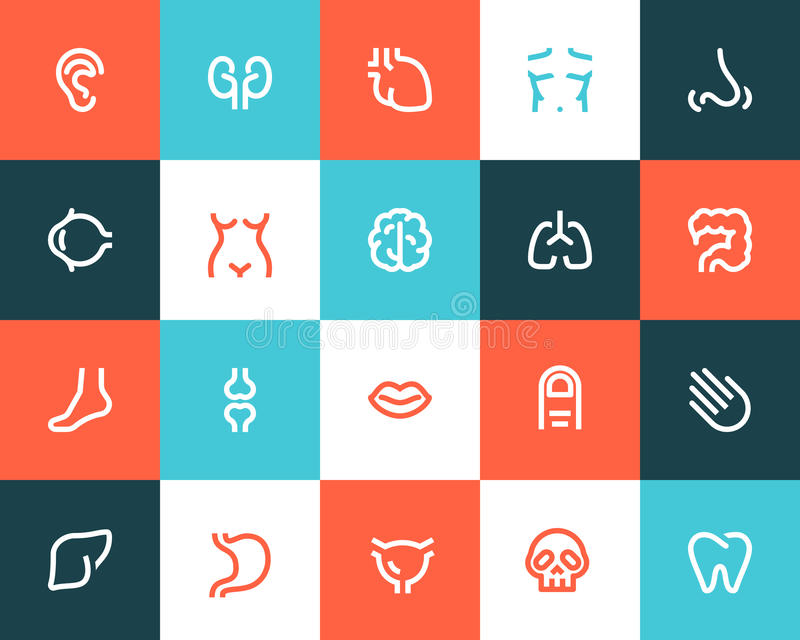 Human anatomy icons. Flat style. Human anatomy icons set. Flat style stock illustration