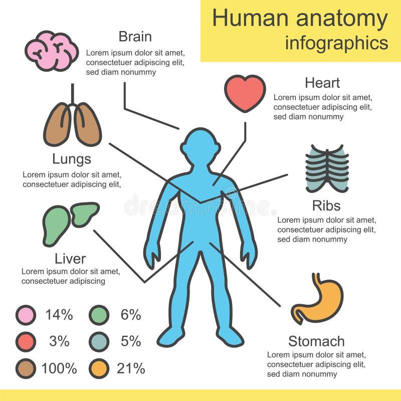 Human Anatomy Outline Infographics Stock Vector Illustration Of
