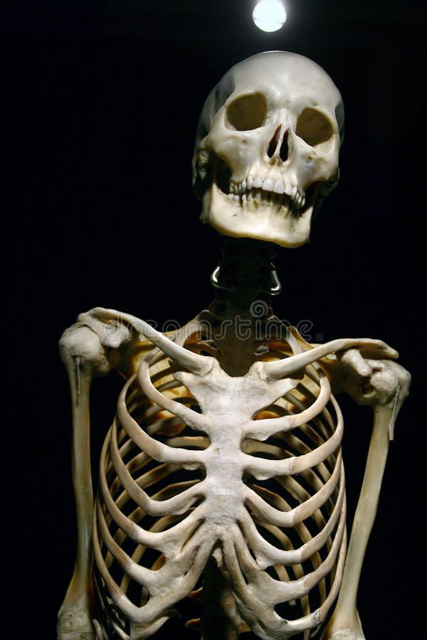 Real Human Skeleton Pictures Image collections - human anatomy ...