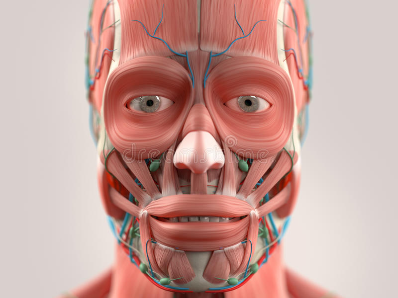 Human Anatomy Showing Head Face Eyes Stock Photo Image Of Nose