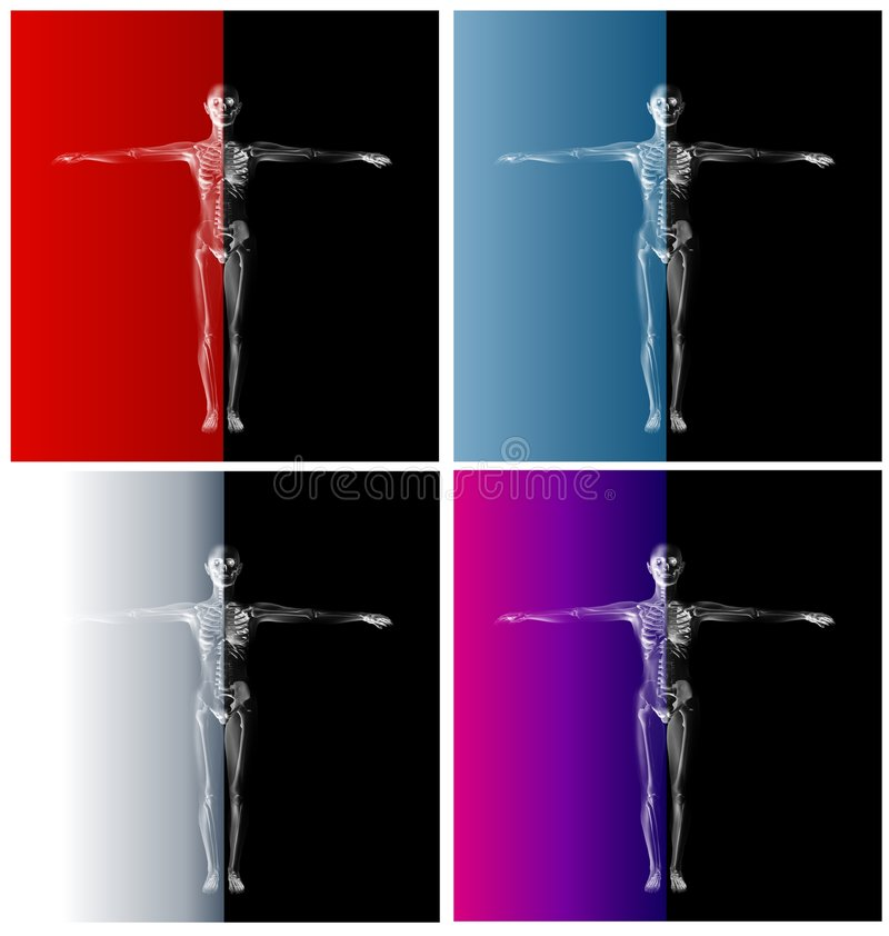 Human Anatomy Two Tone Skeletons stock illustration