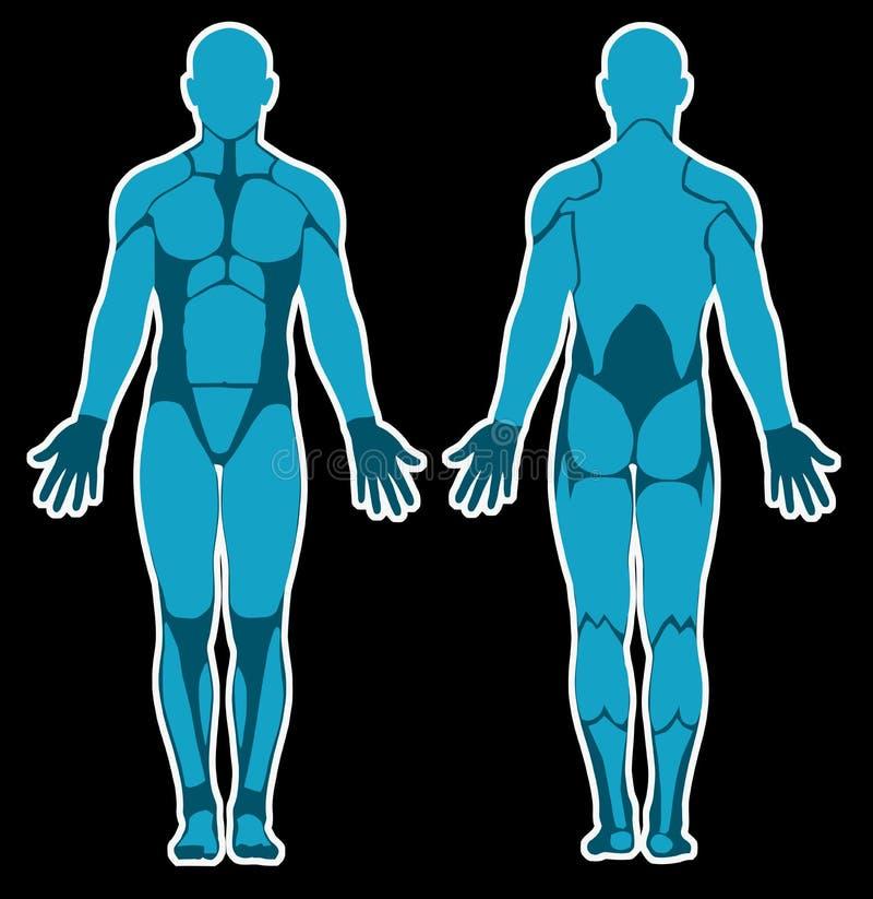 Human anatomy stock illustration illustration of vector 38626828 human anatomy ccuart Image collections