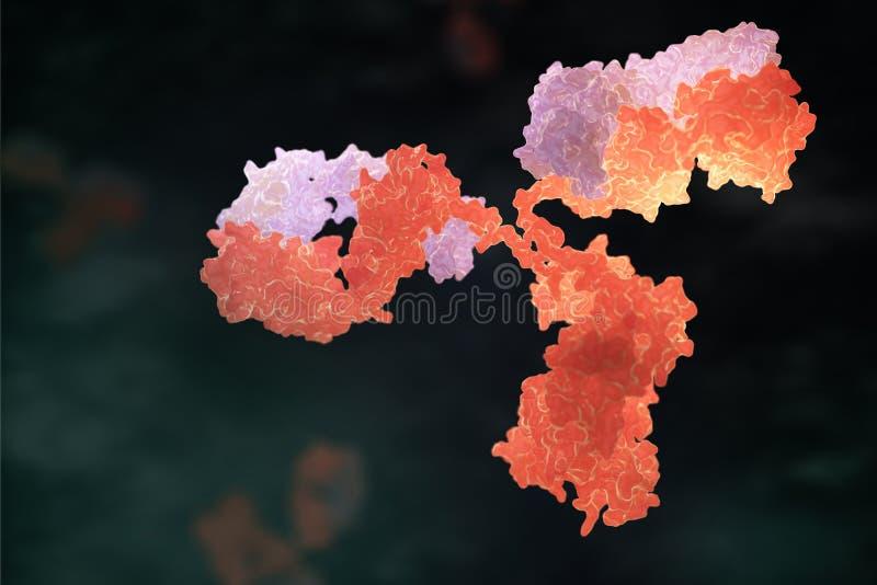 Human antibody immunoglobulin vector illustration
