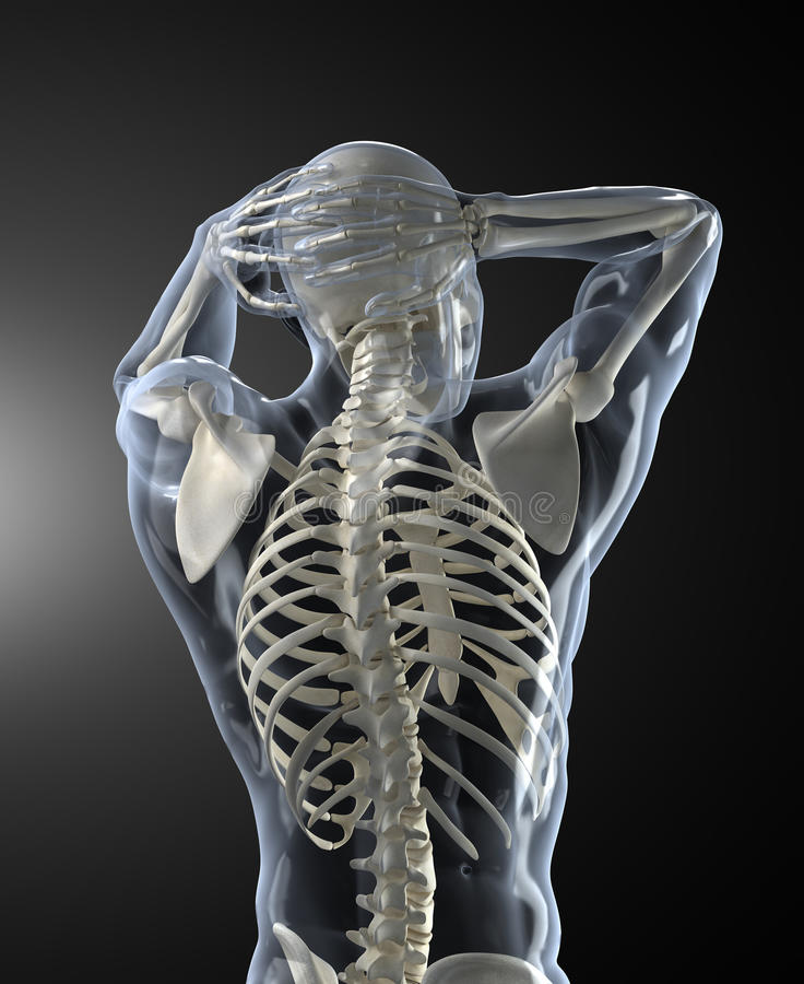 Human Back Scan Royalty Free Stock Photos