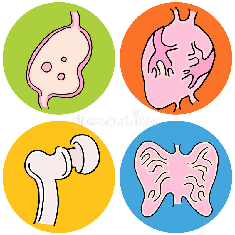 Human Biology Icons vector illustration