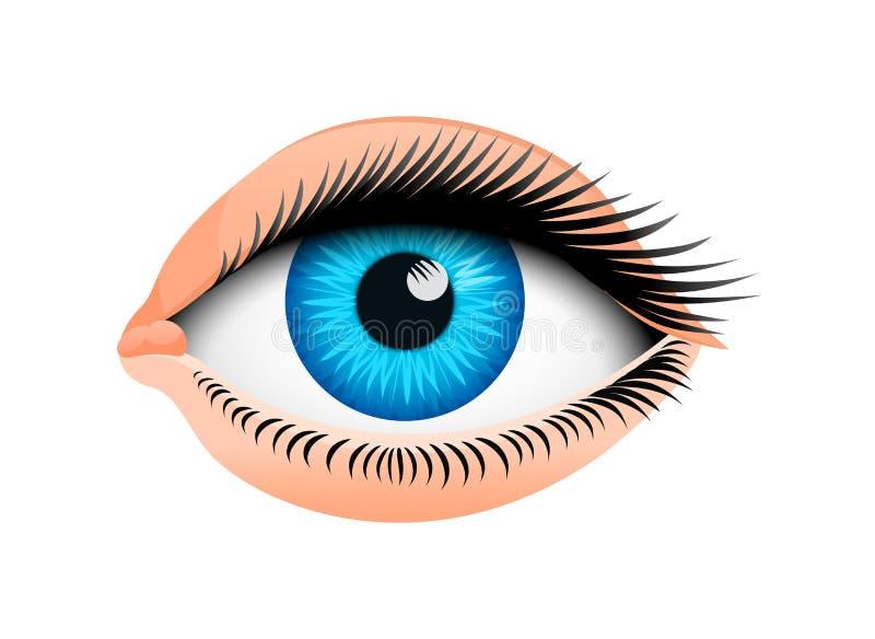 Human biology, sensory organ, anatomy illustration. face detailed eye or view. set medical science or healthy man. Vision look europeoid royalty free illustration