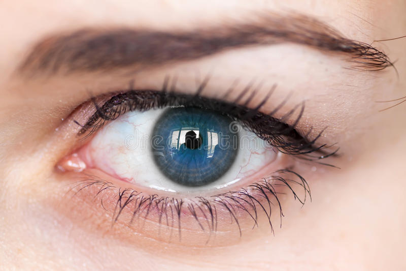Human blue eye. royalty free stock photos