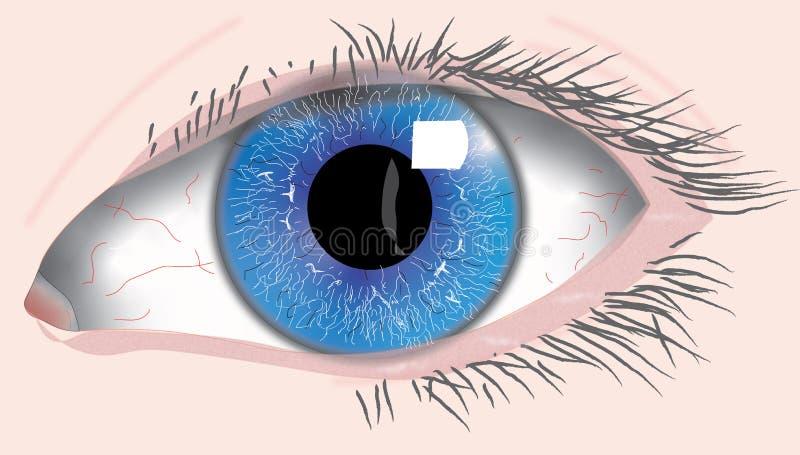 Human blue left eye. Left eye of an adult human. Body part. Iris, pupil, cornea, sciera royalty free illustration