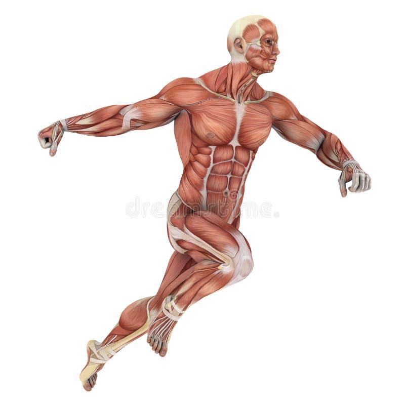Human body stock illustration
