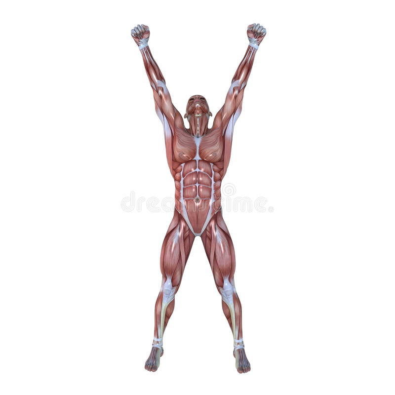 Human Body Royalty Free Stock Photo