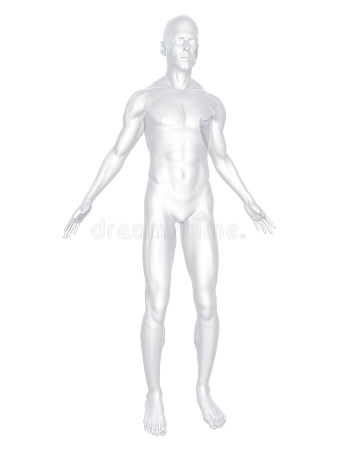 Download Human body stock illustration. Image of muscles, white - 5971749