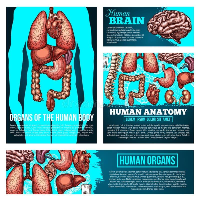 Human body anatomy banner with organ, bone sketch stock illustration