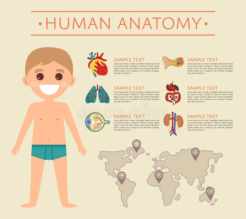 Human Body Anatomy Poster With Smiling Kid Stock Illustration