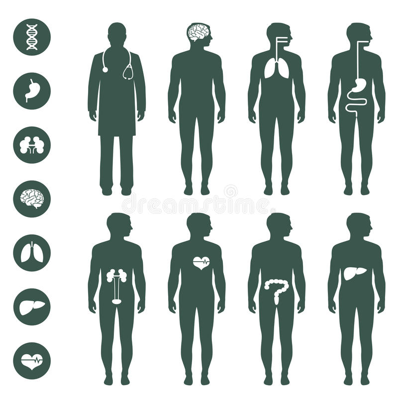 Human body anatomy vector illustration