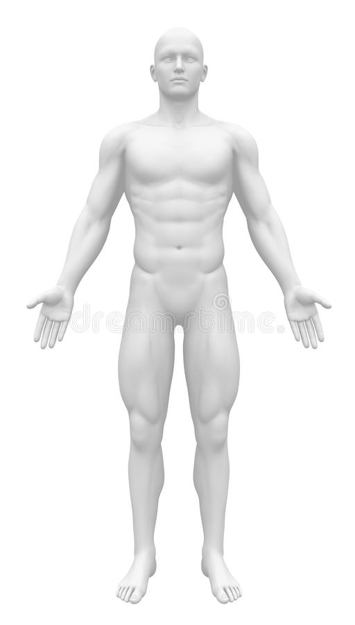 Blank Anatomy Figure - Front view stock illustration