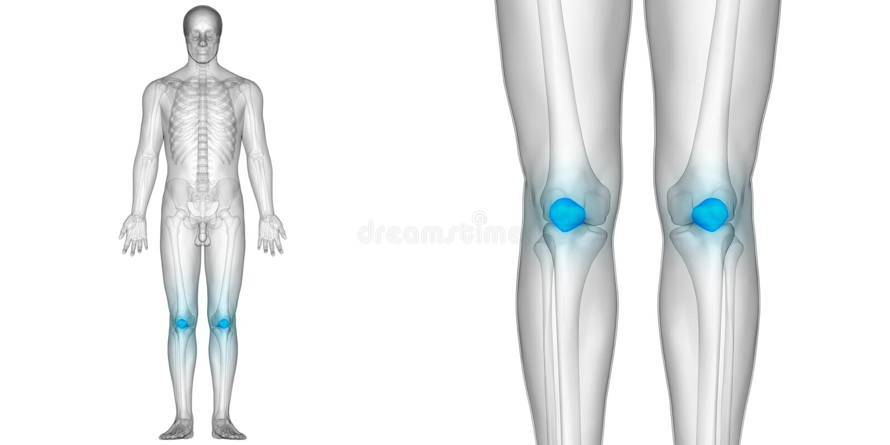 Human Body Bone Joint Pains Anatomy Patella Bones Stock Illustration