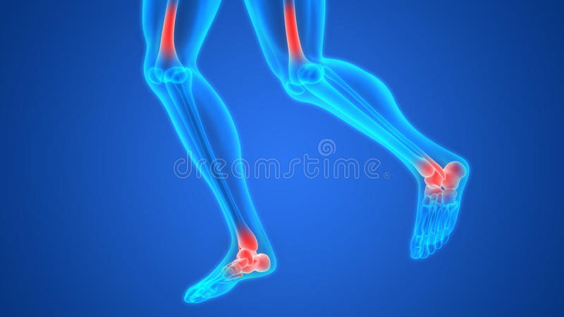 Human Body Bone Joint Pains (Foot joints and Bones) Anatomy. 3D Illustration of Human Body Bone Joint Pains (Foot joints and Bones) Anatomy stock illustration
