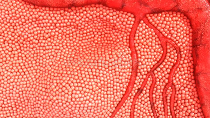 Human Body Cells. Cells are the basic building blocks of all living things. The human body is composed of trillions of cells. They provide structure for the body stock image