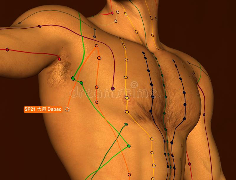 Acupuncture Point SP21 Dabao, 3D Illustration, Brown Background royalty free stock images
