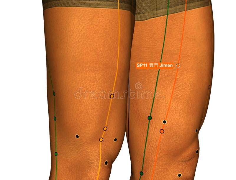 Acupuncture Point SP11 Jimen, 3D Illustration, White Background royalty free stock photography