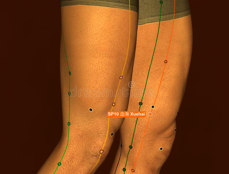 Acupuncture Point SP10 Xuehai, 3D Illustration, Brown Background royalty free stock photo