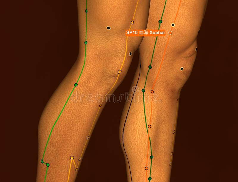 Acupuncture Point SP10 Xuehai, 3D Illustration, Brown Background stock images