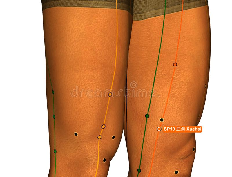 Acupuncture Point SP10 Xuehai, 3D Illustration, White Background royalty free stock photos