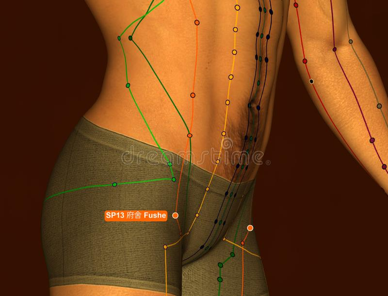 Acupuncture Point SP13 Fushe, 3D Illustration, Brown Background royalty free stock photography